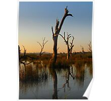 Morning shadows and dead Trees Poster