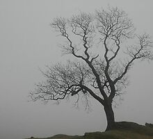 Tree in fog by Kevin McNeill