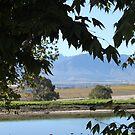 Cape winelands by jozi1