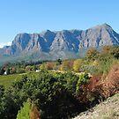 Stellenbosch wine country by jozi1