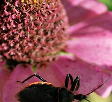 Bug Hunt by Tracey Hampton