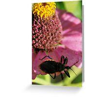 Bug Hunt Greeting Card
