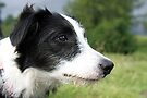 Tilly in the Lakes by Debbie Ashe
