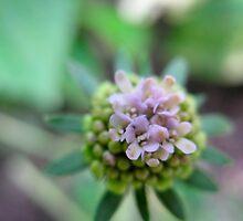 Launchpad Flower by MarianBendeth