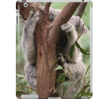 Koala, Blackbutt Reserve, NSW, Australia iPad Case/Skin
