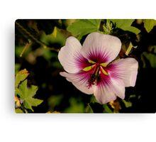 Pink Macro Hibiscus Canvas Print