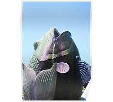 Fish Fountain  Poster