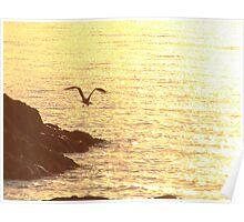 Golden waters Poster