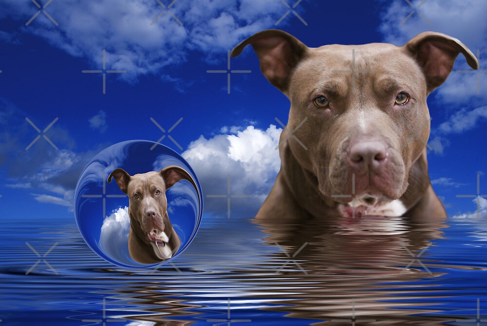 American Staffordshire Terrier by Beverly Lussier