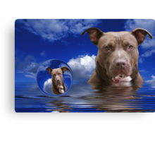 American Staffordshire Terrier Canvas Print