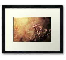 Immersed in illumination Framed Print