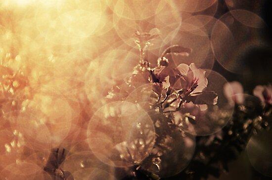 Immersed in illumination by Joakim