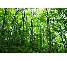 Green Forest Photographic Print