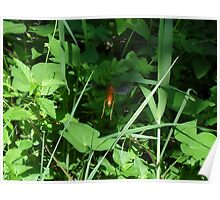 Red Wasp (a Paper Wasp) Poster