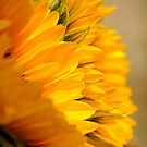 Sunflower Petals doubles by Karen  Betts