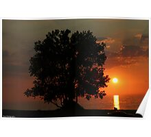 tree and sunset at warren dunes Poster