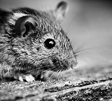 Mouse by Christopher Wardle-Cousins