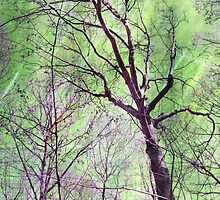 Trees at Flat Rock Brook by Amy Neufeld