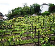 Montmartre Vineyard Photographic Print