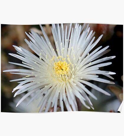 Fairy Flower Dust Poster