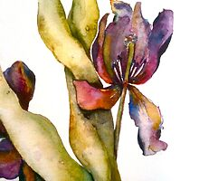 Close Up Iris by nancyballard