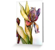 Close Up Iris Greeting Card
