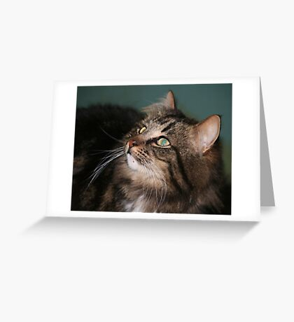 Meet Whiskers Greeting Card