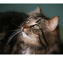 Meet Whiskers Photographic Print