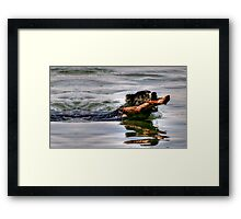 Go Fetch!! Framed Print