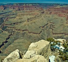 South Rim, Spring 2010 (2) by Bob Moore
