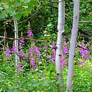 Aspen Tree's and Wild Flowers, Idaho by trueblvr