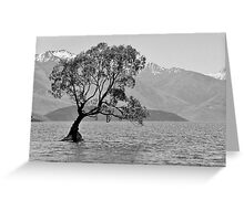 Stand - Queenstown, New Zealand Greeting Card