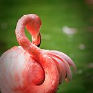 Flamingo by Peter Denness