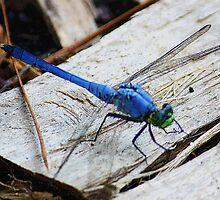 Blue Dragonfly by AuntDot