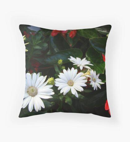 Symphony! African daisies & begonias Throw Pillow