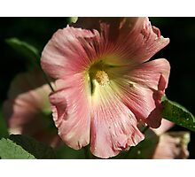 Another Hollyhock Parent Photographic Print