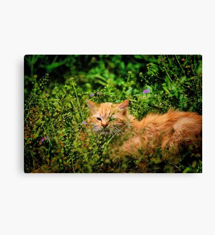 River Cat Canvas Print