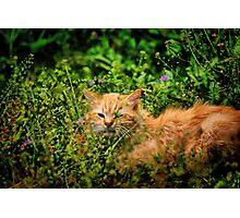 River Cat Photographic Print