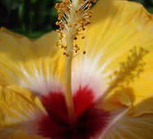 Hibiscus Sunshine by BunBun