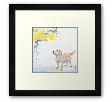 No one saw Spike catch the Budgie Framed Print