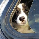 """""""Did Anyone See Where They Went...?"""" by Meg Hart"""