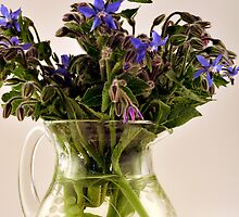 borage in glass jug by Georgina James