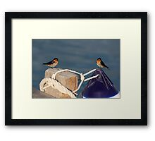 Welcome Swallows, Monkey Mia pier Framed Print