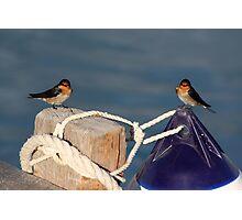 Welcome Swallows, Monkey Mia pier Photographic Print