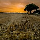 Harvest Time by Charles & Patricia   Harkins ~ Picture Oregon