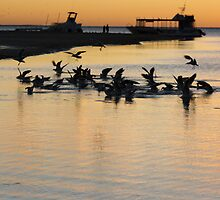 Sea gulls 2, Coral Bay, sunset by Becncall Bec Lloyd