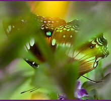 Butterfly hiding by Susan Kelly