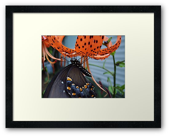 Just Hang'en  by NatureGreeting Cards ©ccwri