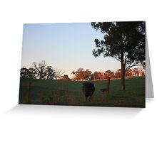 Cows, Lobethal, South Australia, Greeting Card