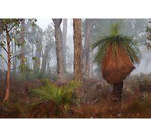 Fog In Frankland Bush Photographic Print